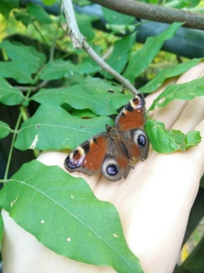 Achtsam sein: Schmetterling