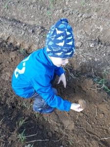 mein Sohn bei bei der Kartoffelernte
